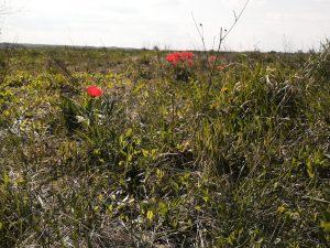 Hungarian field