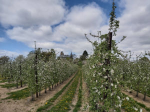 Fruit plantation in Borgloon