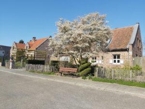 Blossom tree in Gelinden