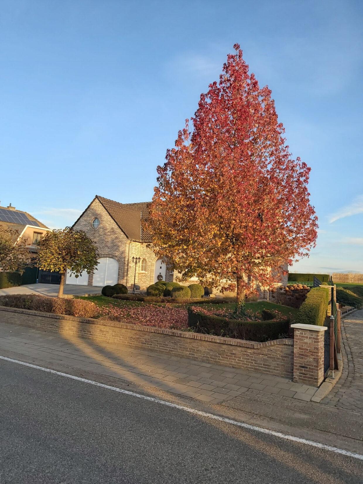 Autumn Colors - 1