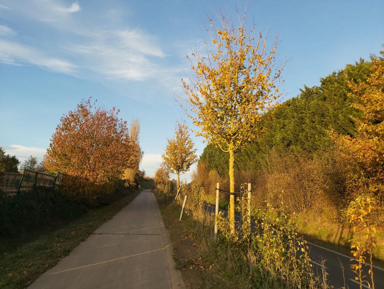 Autumn Colors - 3