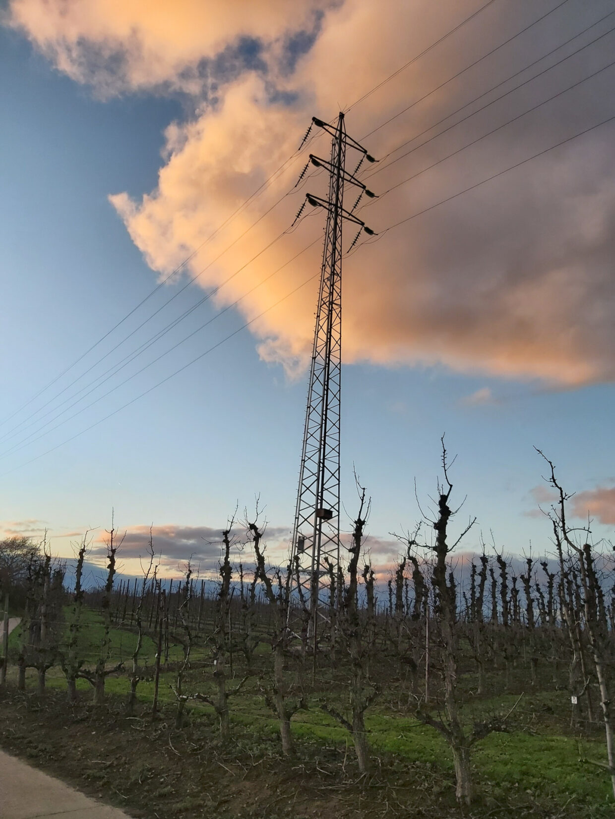 Power tower in a pear orchard
